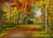 Herfst / Fall © Aad Hofman
