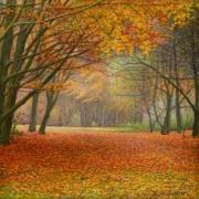 Herfstbos / Autumn forest © Aad Hofman