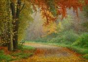 Herfstkleur / Autumn colors © Aad Hofman