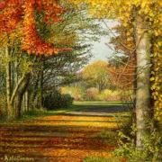 Herfsttooi / Autumn colors © Aad Hofman