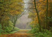 Ochtendnevel / Morning mist © Aad Hofman