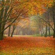 Herfstbos / Autumn forest © Aad Hofman