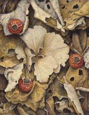 Compositie met gedroogde rozenbottels © Aad Hofman