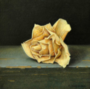 Gedroogd roosje © Aad Hofman