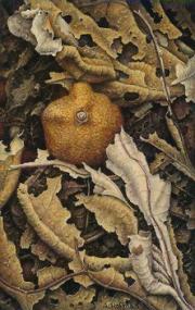 Gedroogde mandarijn © Aad Hofman
