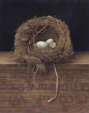 Verlaten vogelnest © Aad Hofman