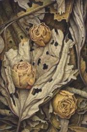 Compositie gedroogde roosjes © Aad Hofman