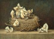 Nestje met hortensia © Aad Hofman