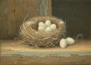 Verlaten nestje © Aad Hofman