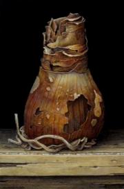 Verdroogde bloembol / Dried flower bulb © Aad Hofman